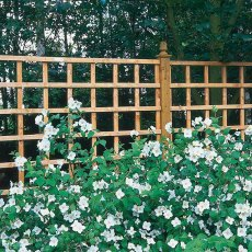 4ft High (1220mm) Forest Heavy Duty Trellis
