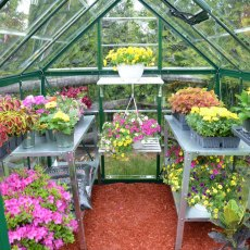 6 x 8 Palram Harmony Greenhouse in Green - interior