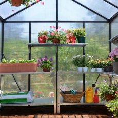 8 x 8 Palram Glory Greenhouse in Anthracite - interior with optional shelving and staging