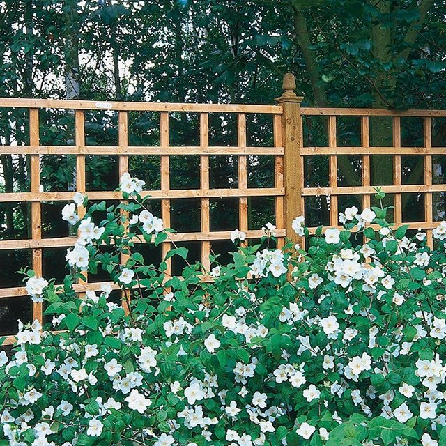 6ft by 6ft (1830mm x 1830mm) Forest Heavy Duty Trellis