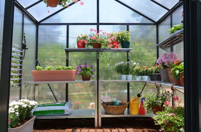 8 x 12 Palram Glory Greenhouse in Anthracite - interior with optional shelving and staging